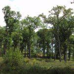 Forêt-Laveyron-Lussagnet-pays-grenadois